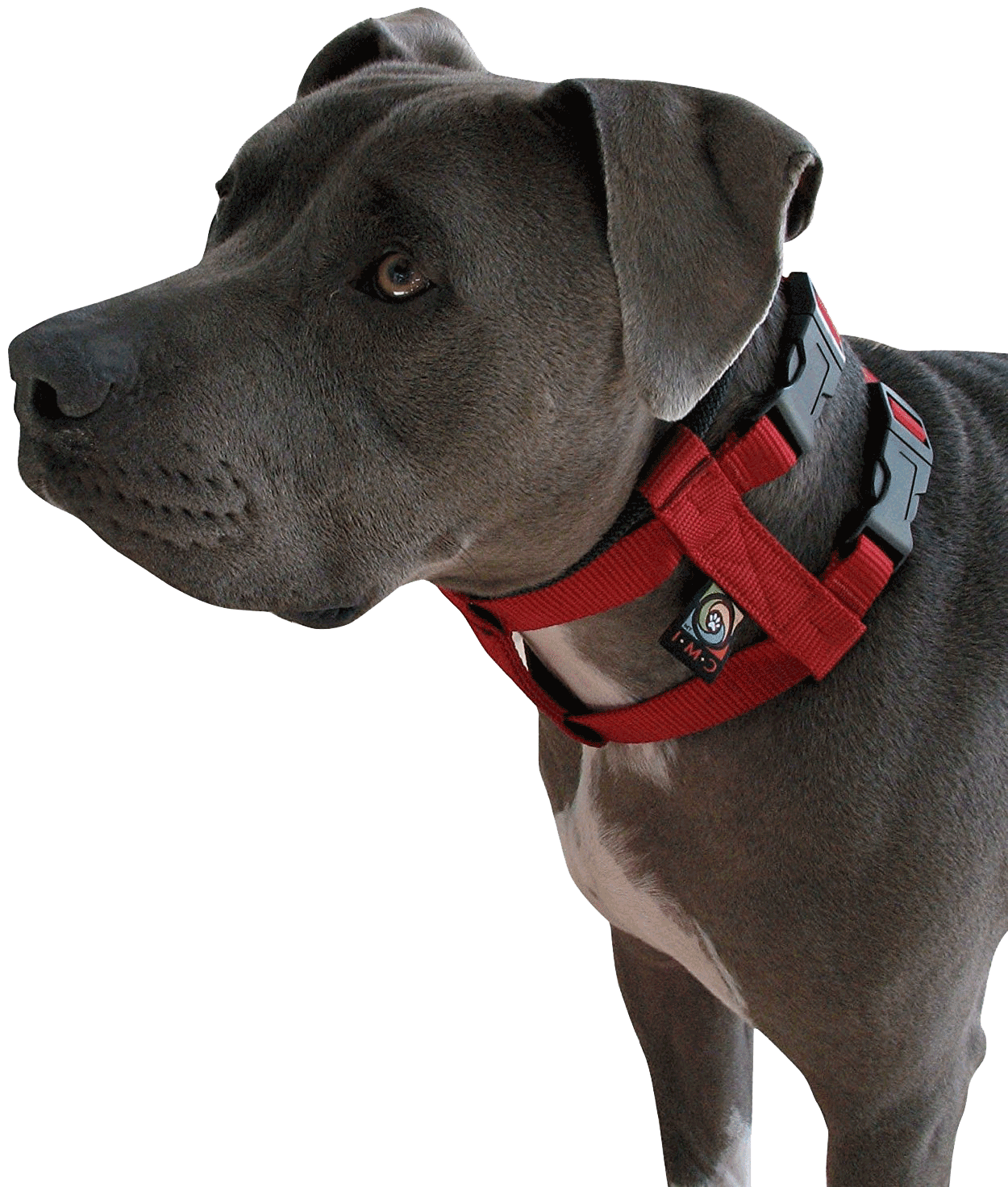 Cesar Millan Original Illusion Collar Trainingshalsband