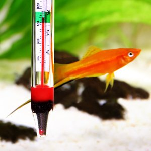 Analoges Thermometer im Aquarium.